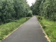 Concerned deer on the bike path to Fort Stevens National Park