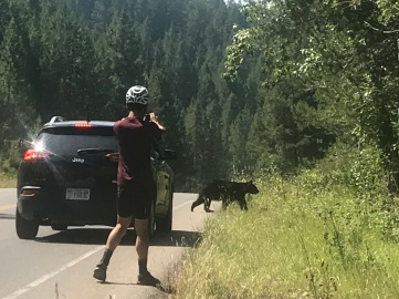 We were cycling and heard a branch snap. Dan rushed up into the woods with a camera to get a close up of what he thought was a deer. He came face to face with momma bear and three cubs