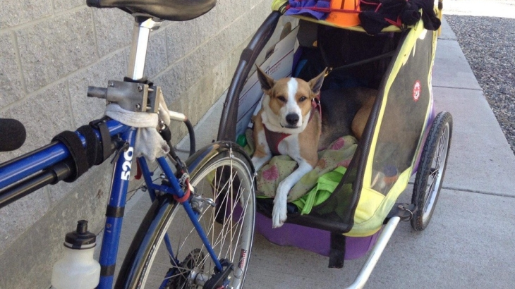 Mona the cycling dog