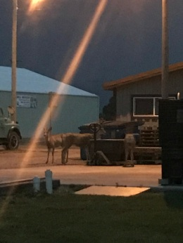We camped behind a Distillery at Wisdom MT. There was this plant stuff that they had in bins behind the building that the deer seemed to love.